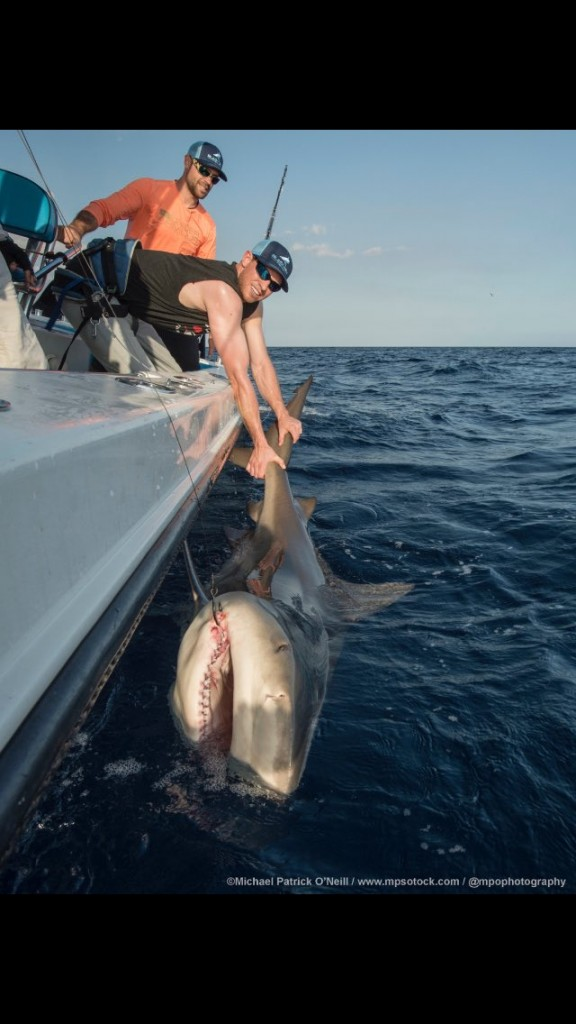 Steven Matz caught a huge shark and has frightening photo to prove it