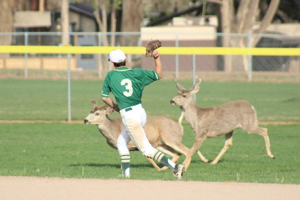 Deer caused a 10-minute delay during a high school baseball game
